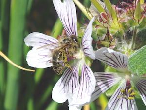 Helensburgh Beekeepers Association