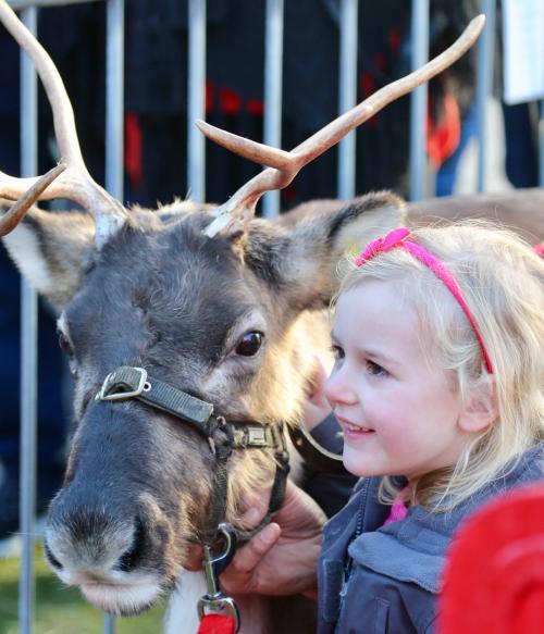 Ayrshire Reindeer