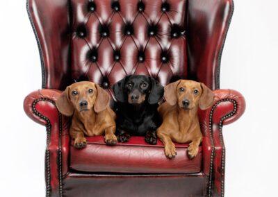 Angus & Amelia Photography - Pets Portrait
